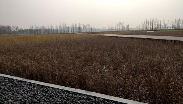 海安上湖人工湿地(日处理量:1.2万吨)