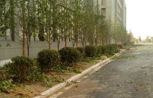 江北孵化园区绿化工程
