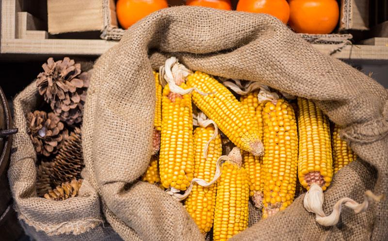 飼料及玉米深加工項目